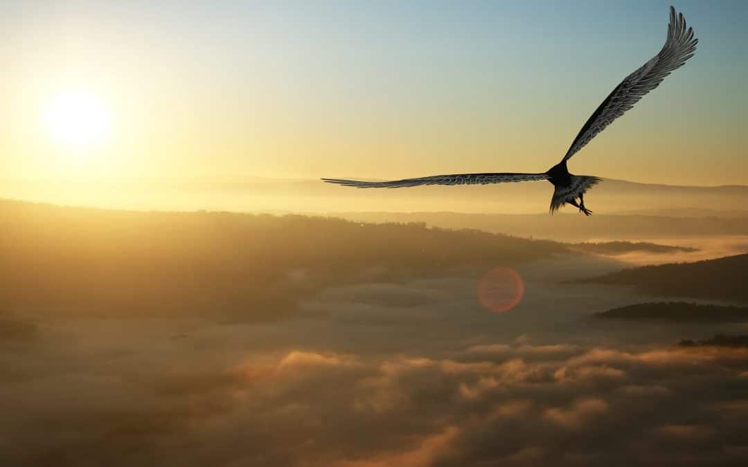 Descend To Rise