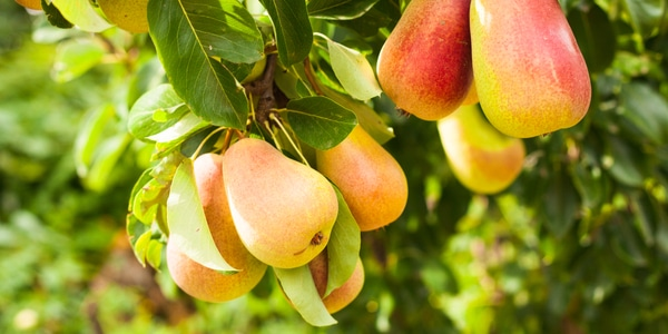 """Plucking  the """"Low-Hanging  Fruits"""""""